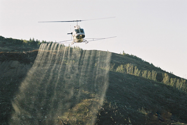 Aerial warfare: Marlborough Helicopters sprays herbicide on a forestry block in Collins River in the Whangamoa hills.