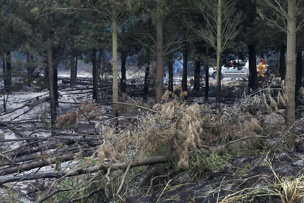 ASHEN: 150 square metres of trees and scrub were burnt.
