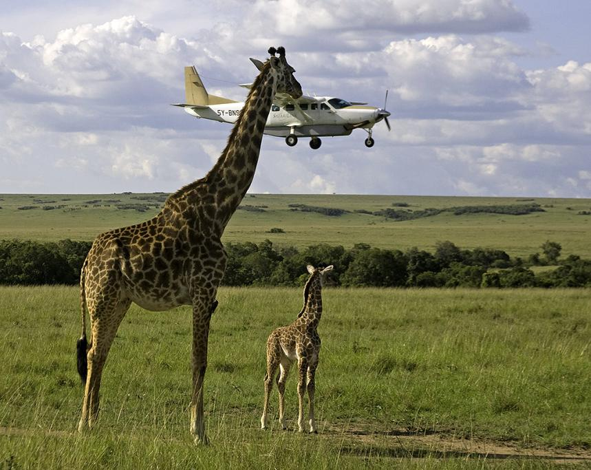 Small African airlines as part of their cost-cutting have co-opted outside sources to help with running the airlines. Pre-landing seatbelt checks are also out-sourced, as shown here.