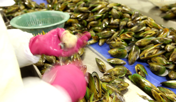 Shellfish Production
