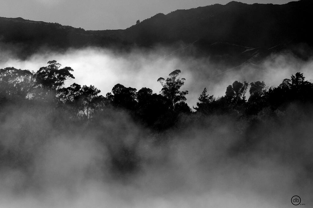 DANIEL BENNETT: Morning Mist (Adults category)
