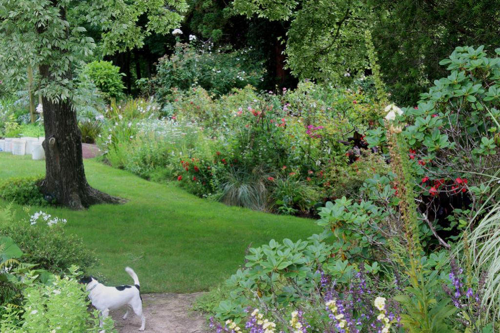 WATCH DOG: Fox terrier Boss keeps a watchful eye on the garden and loves to roam the extensive and lush pastures.