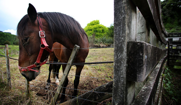 Barney the horse, Taumarunui pound
