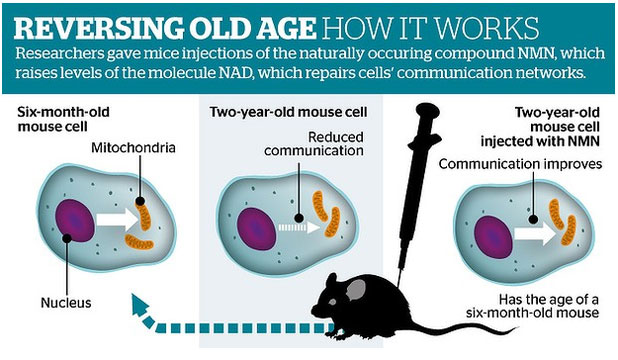 AGEING SCIENCE