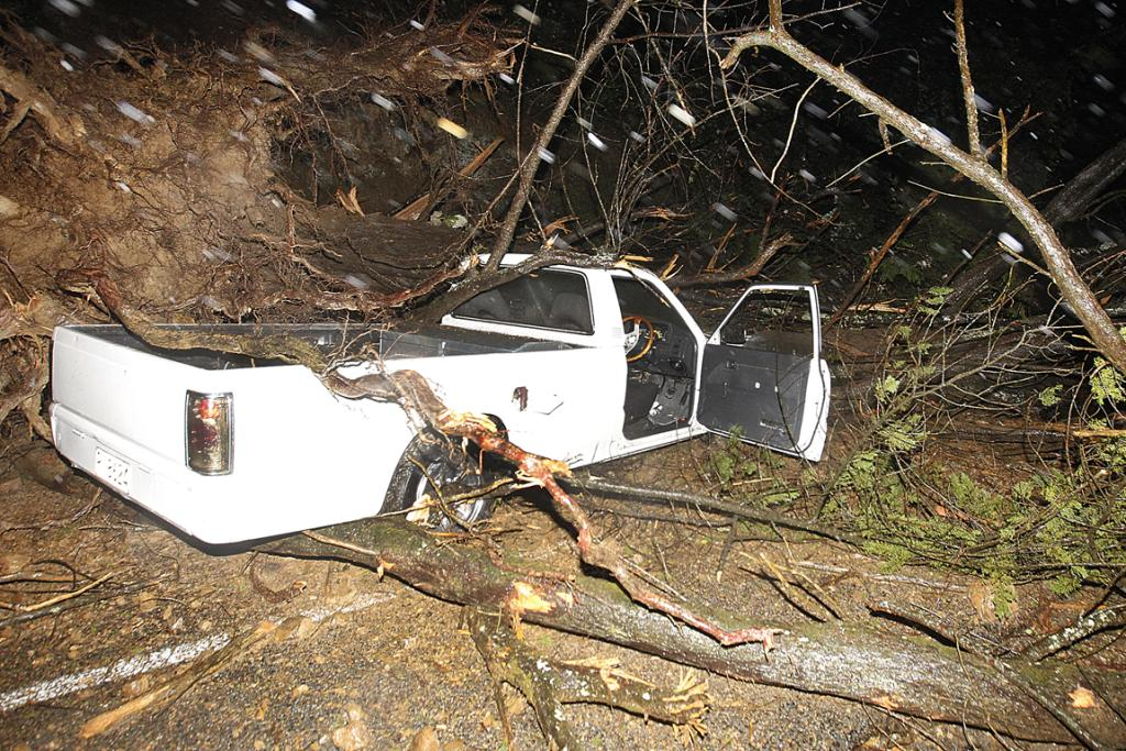 Destroyed: A ute lies smashed by a falling tree in Middleton Rd, Churton Park.