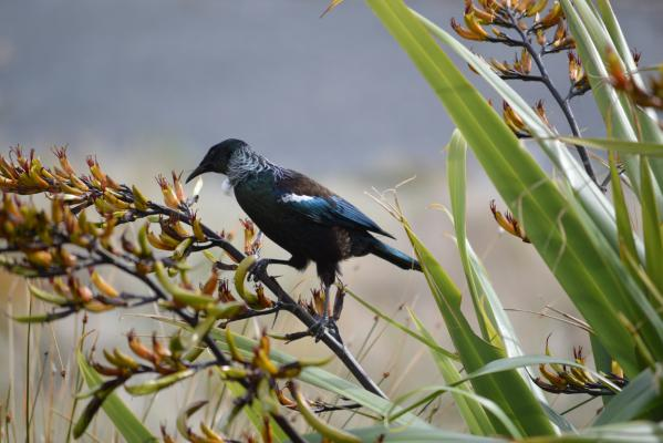 Summer pix Tui Eastbourne