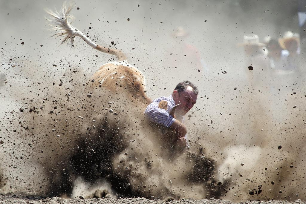 TAKE THAT: A bucking bronco leaves a cowboy lying in the dust during this year's Canterbury Rodeo.