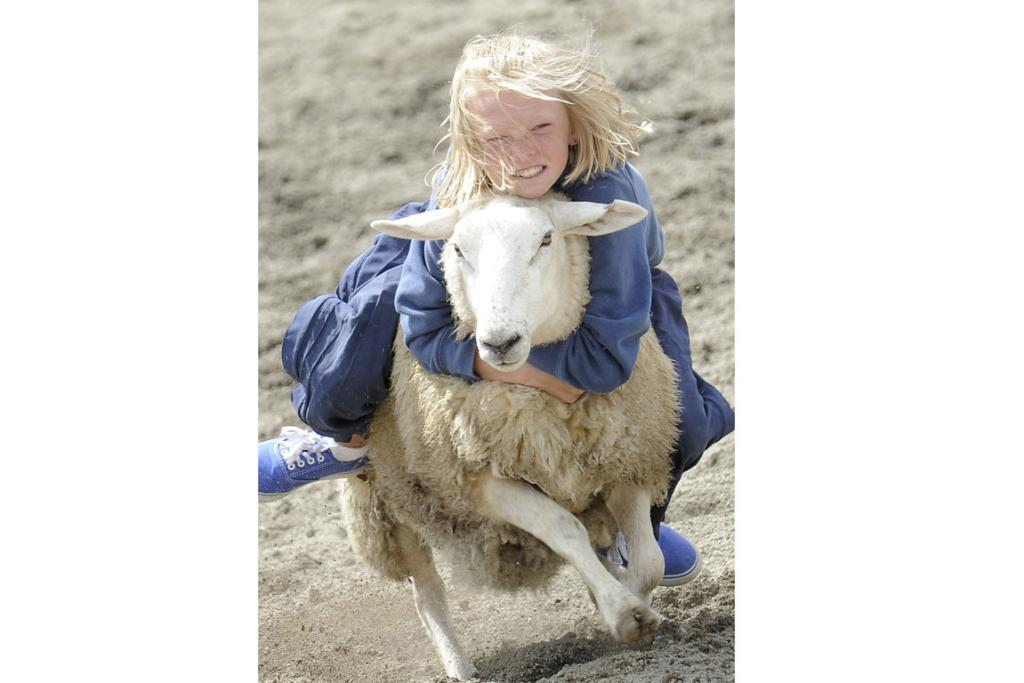 Ten year old Rachel Turner, of Mossburn, holds on tight as she rides a strong ewe at the 46th annual Te Anau Rodeo.