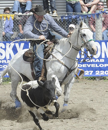 Anthony Perkins, of Gore, in the Rope and Tie at the 46th annual Te Anau Rodeo.