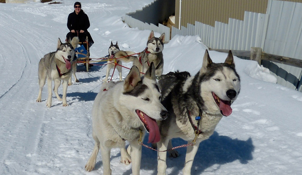 DREAM TEAM: Mushing a team of sled dogs in Wanaka was a bucket list experience for Maria Alomajan.