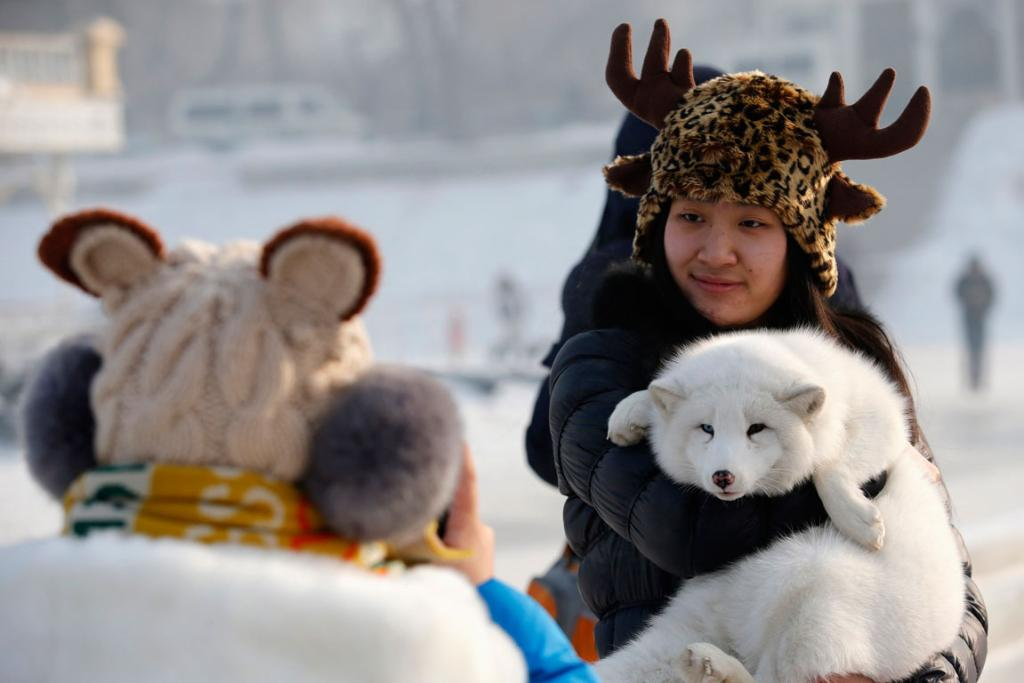 A woman poses with a white fox during the Harbin Ice and Snow Sculpture Festival.