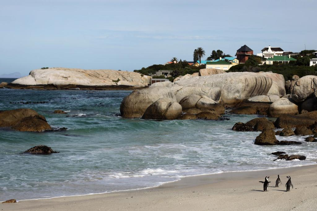 HAPPY FEET: Visit Boulders Beach to see South African penguins.