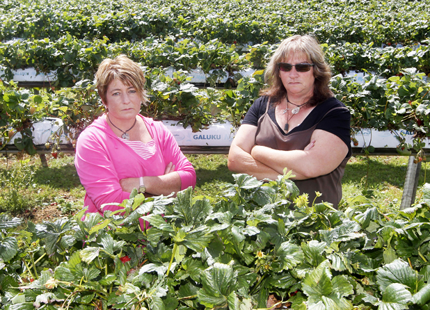 Sommerville Orchard owner Sandy Williams, left, and sister-in-law Sharleen Eaton are upset after thieves stole some of their fruit, only hours after a hail storm destroyed much of the crop.