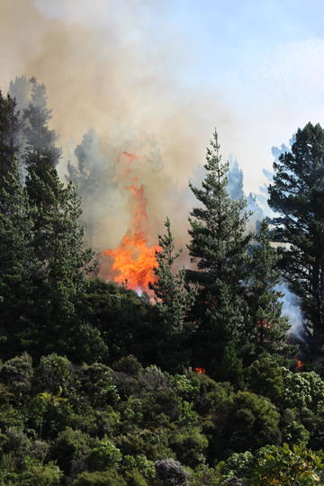 Fire at Flagg Bay in Port Underwood