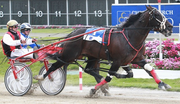 TOP CLASS: Terror To Love and driver Ricky May will be out for more success in tonight's Northern Southland Cup at Ascot Park.