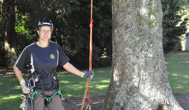 Eltham's Nicky Ward-Allan is preparing the trees in Stratford's King Edward Park ahead of the Taranaki Open Tree Climbing competition next weekend.