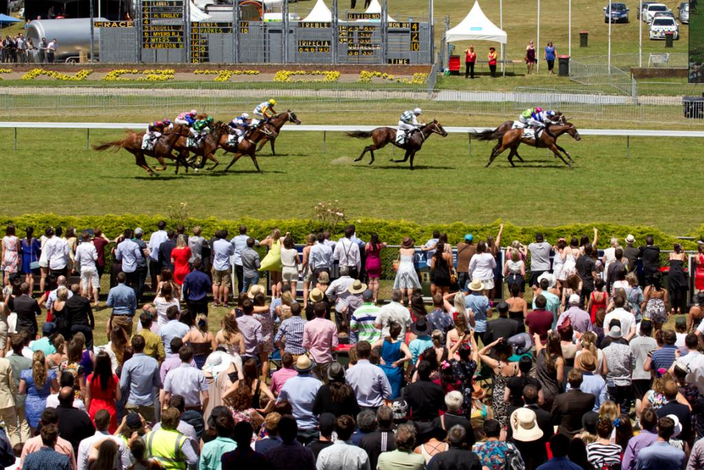 The horses get going for race 3 at Wellington Cup day at Trentham.