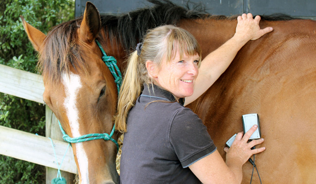 EQUINE ATHLETE: Monty the thoroughbred gets a massage from Rachel Harford.