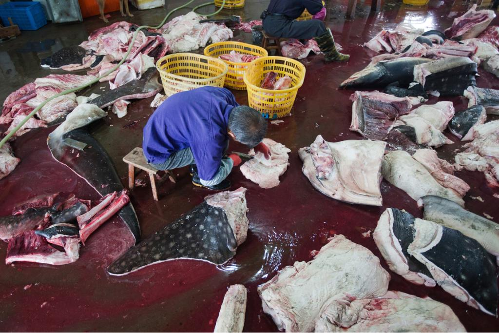 The shark skins are sold as leather, with shark flesh sold as food, WildLifeRisk says.