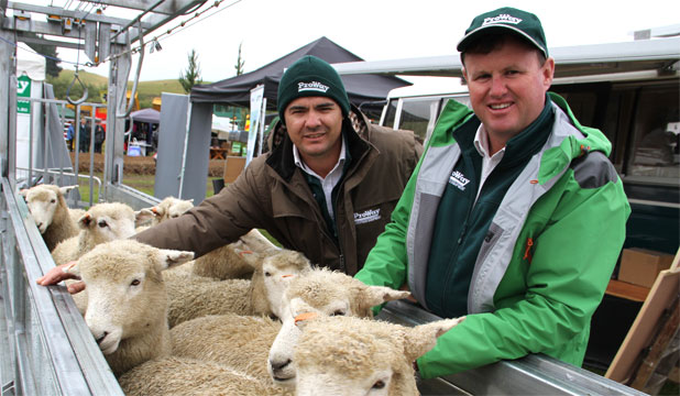 JAMMING THEM IN: ProWay director Joe Hoban and Troy Brose with their sheep bulk handler at Southern Field Days.