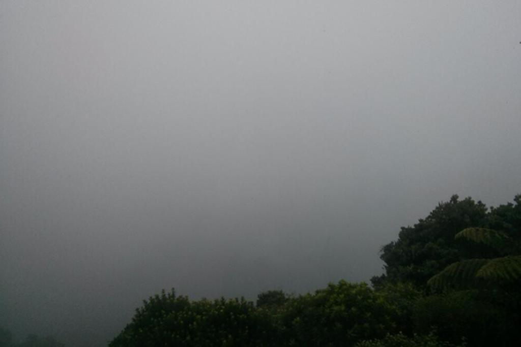 Fog in Wellington, February 21