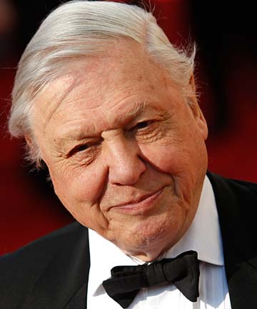 DAVID ATTENBOROUGH: 'In all my years of exploration, these are the creatures I find most curious.'