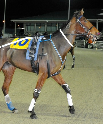 GOOD CHANCE: One-win trotter Lucie De Gerolstein will be nominated for the Gore grass track meeting on March 9.