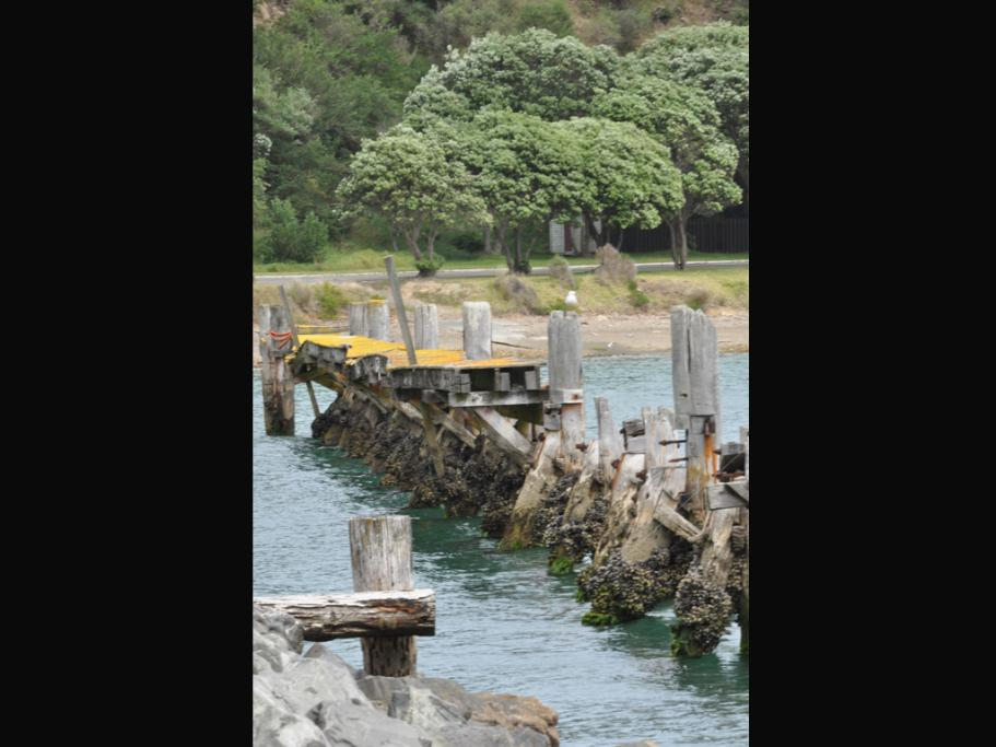 ERODING: The wharf at Shelly Bay has almost totally rotted away.