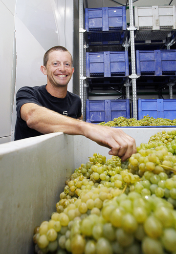 I SPY: Spy Valley Wines chief winemaker Paul Bourgeois was excited to be picking sauvignon blanc first this year
