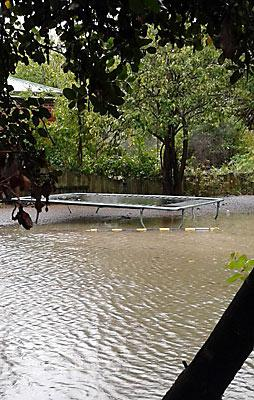 AFLOAT: Trampoline in Richardson Terrace after the Heathcote River burst its banks.