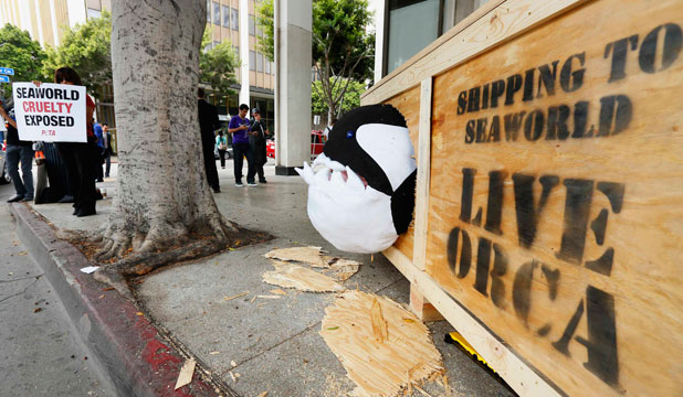 Orca protest at SeaWorld