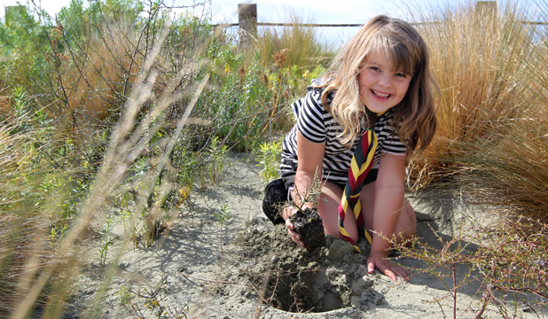 DUNE GARDENING: Ranui Cub Abby Lister plants a native shrub in the sand dunes at Caroline Bay to help mark Sea Week.