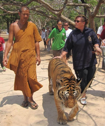 NICE KITTY: A visit to the Tiger Temple in Thailand.