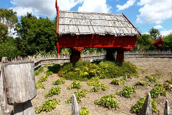 AFTER: Te Parapara Garden as it appears this week.