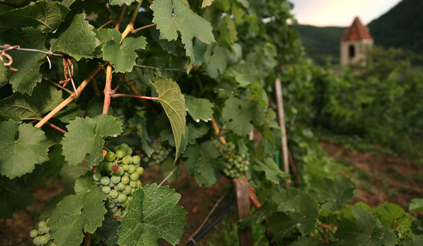 NO OTHER WILL DO: The wine's grapes must be grown within Wachau Valley.