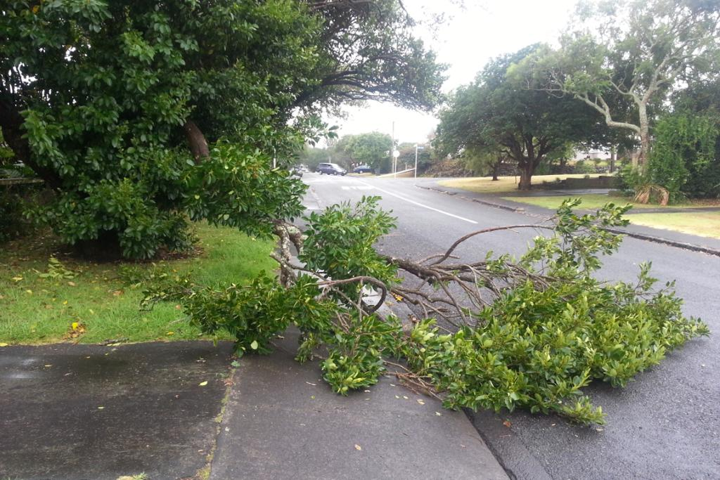 The storm sent trees and branches over roads in Auckland.