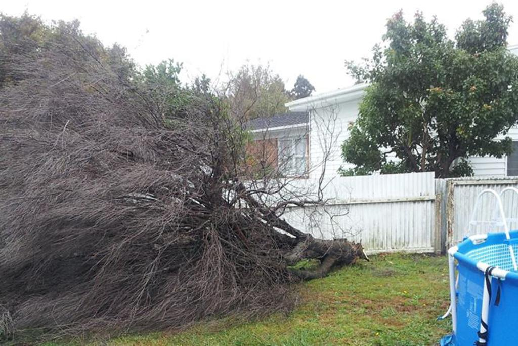 The storm brought down the one tree this household's landlord didn't want cut down.