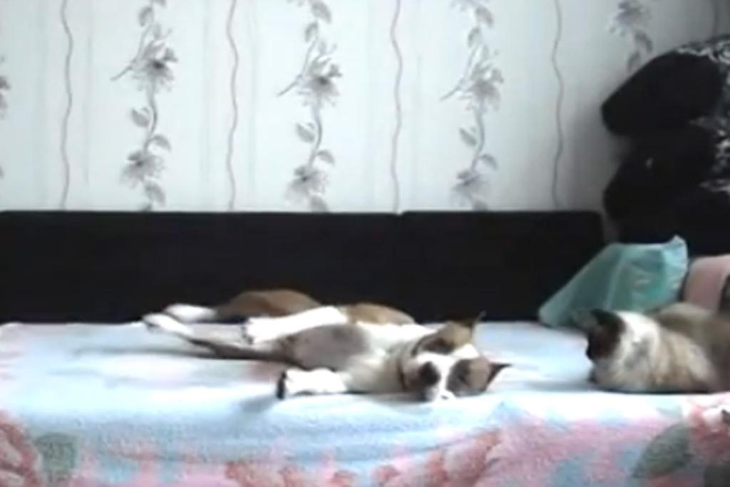 "THIS DOG: When the human's away the dog will play. The best moment? <a href=""https://www.youtube.com/watch?v=7D5bPLxU8U8"" target=""_blank"">1.20 when the dog worries for just a few seconds that human has returned and so pauses his joyous 'you-may-want-to-ban-me-from-the-comfiest-part-of-the-house-but-it's-all-mine-when-you're-gone-fool' dance.</a>"