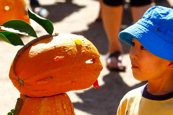 OH HELLO: Asher Yuan is intrigued by this particular pumpkin creation.