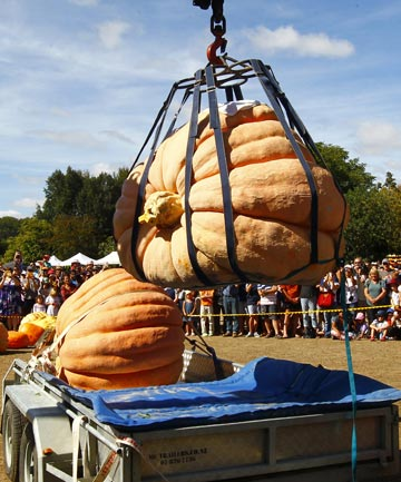 The biggest pumpkin grown by Tim Harris weighed in at 690.5 kg at the Great Pumpkin Carnival in Hamilton Gardens.