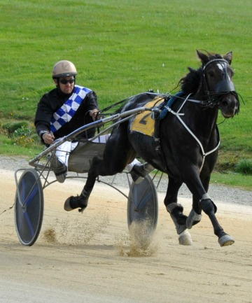 IN GOOD ORDER: Alexandra Leaving, driven by Matthew Williamson, wins at the Forbury Park trials yesterday.