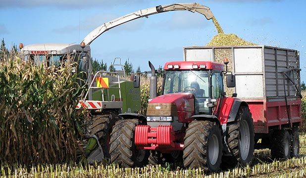 HARVEST DILEMMA: The poorer yields seemed to be only in the Waikato in what has been a highly variable maize silage harvest.