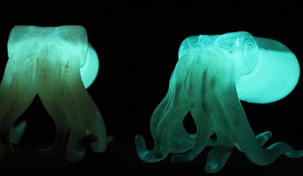 Glow in the dark squid