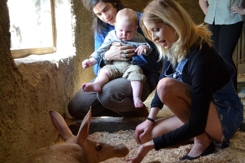 A pregnant Peaches Geldof with husband Thomas Cohen and their son Astala meet London Zoo's aardvarks in 2013.