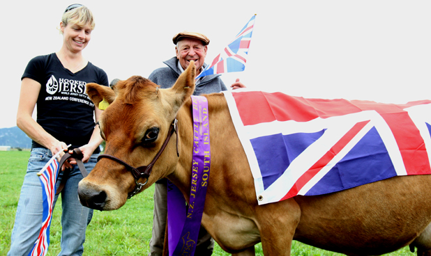 Royal jersey: Jo Tucker and Ian Jordan and jersey cow Sarina wait to welcome the royal couple as they left Base Woodbourne yesterday