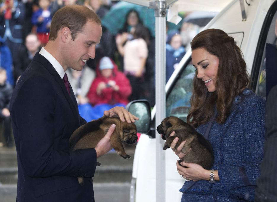 Earlier, police dog puppies were lucky enough to get some royal affection at the Royal New Zealand Police College.