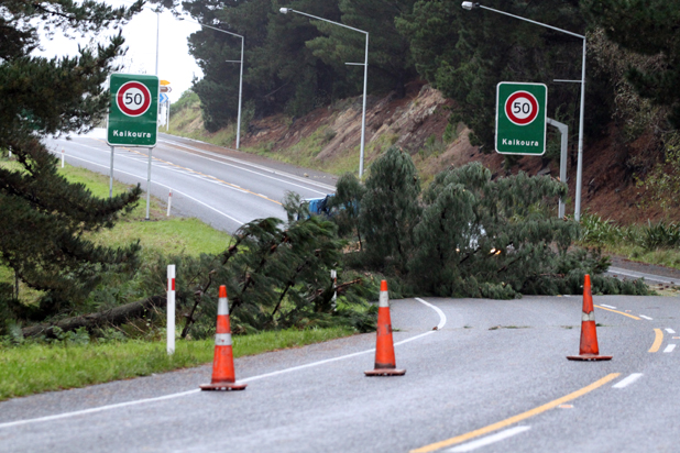 Tree down in Kaikoura