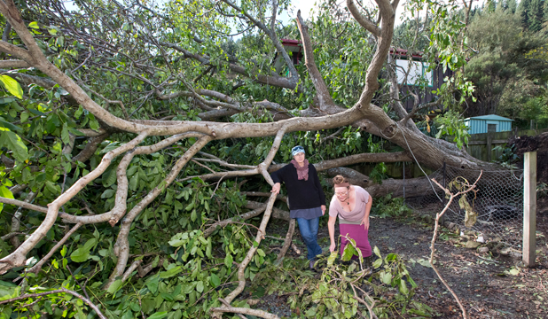 TOPPLED TIMBER:  Lesley Haddon, left and her neighbour Tracy Scott with the walnut tree classified as a Landscape Tree by the Nelson City Council,  which came down during Thursday's storm.