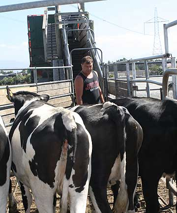 Farmers are being encouraged to empty stock before loading them for transport.