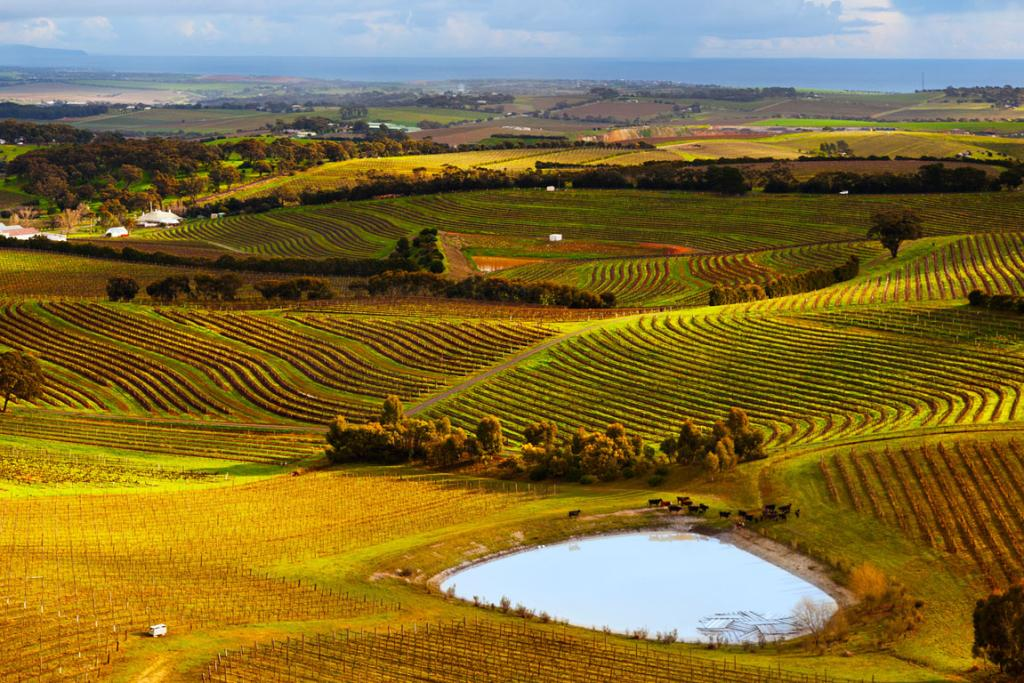 The McLaren Vale wine growing region, 45 minutes from Adelaide.